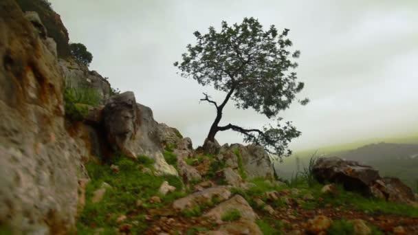 Stock Footage of a lone tree on a windy hillside in Israel.