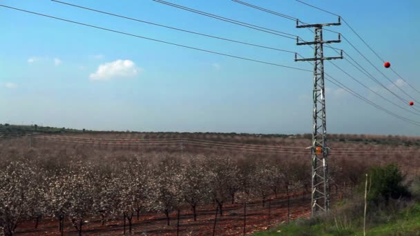 Stock Footage of power lines next to an almond orchard in Israel.