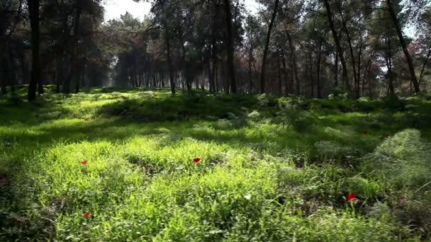 Stock Footage of a green forest in Israel.