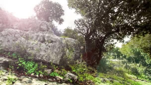 Nahrávku skalnaté zalesněné oblasti v Izraeli