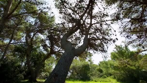 Nahrávku slunce skrze větve doménové struktury v Izraeli.