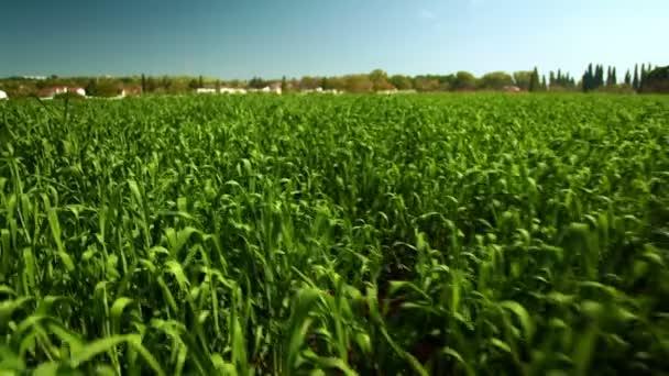 Stock Footage, buja zöld növények, Izrael.