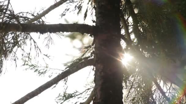 Trunk of pine tree