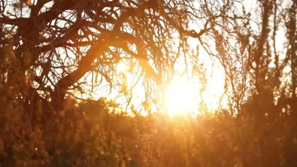 Sonne durch die Bäume in Moab