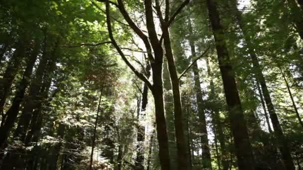 stromy s slunce svítí skrz listoví