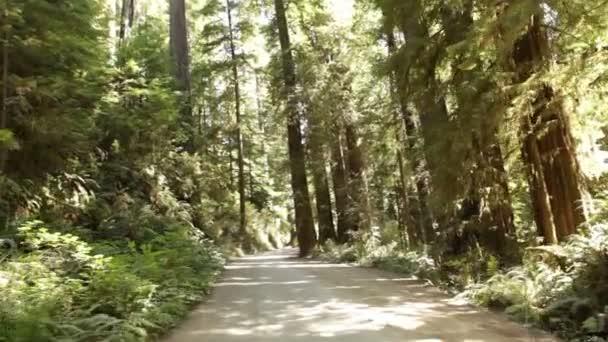 Strada sterrata attraverso la pineta