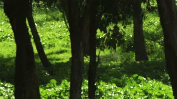 Bezlicencované video záběry z lesních záběrů v Izraeli