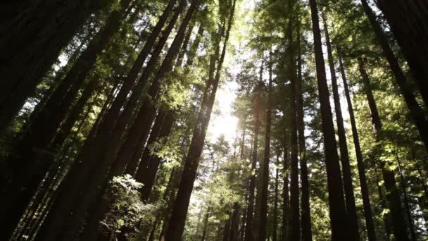 Sun peeks keresztül sűrű grove
