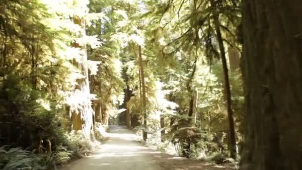 Polní cesta v borovém lese