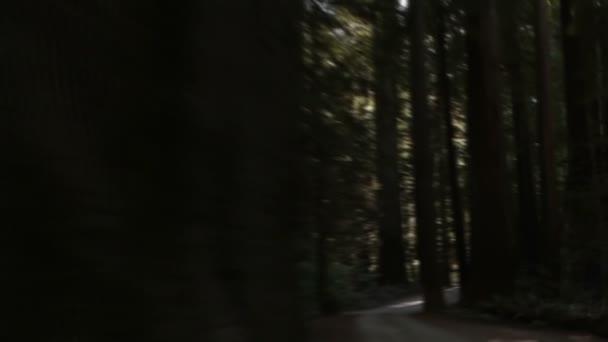 cesta v lese sekvoje