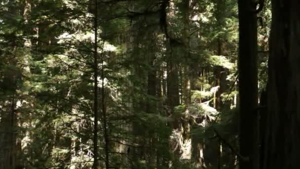 Hustý borový les
