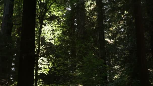 stínem stromů v lese