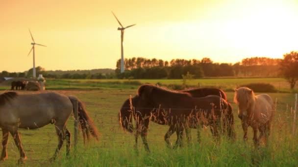 Pferde am Zaun und Windräder auf einem Bauernhof
