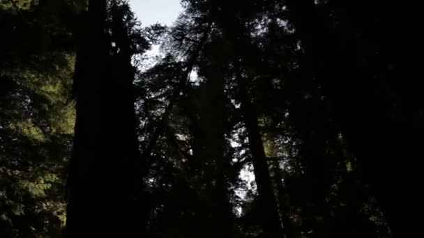 Bright sun behind dark trees