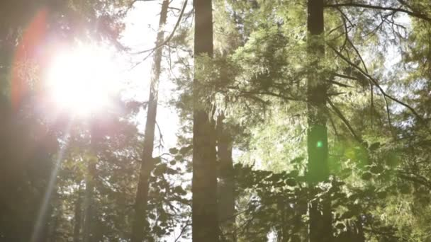 Dvě borovice bez jehel v lese