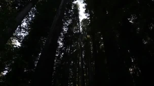 Tall trees in shadow