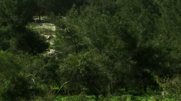 Royalty Free Stock Video Footage of a forest and meadow shot in Israel
