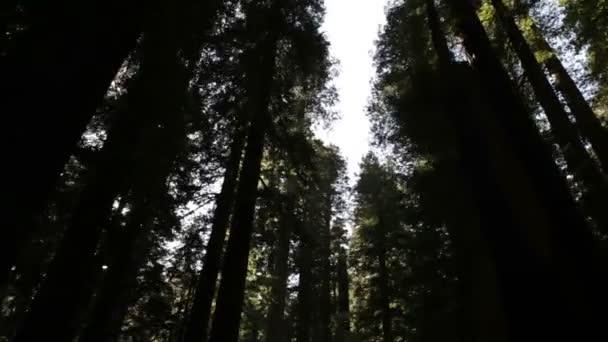 Tall shadowed trees