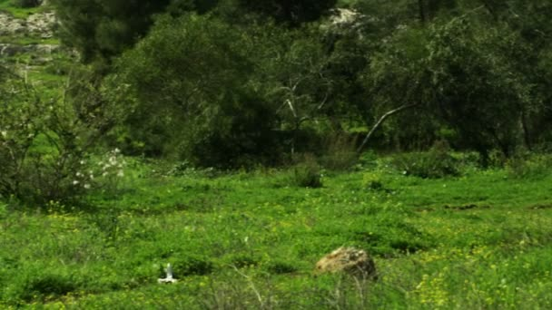 Royalty Free Stock Video Footage of a forest and meadow shot in Israel at 4k