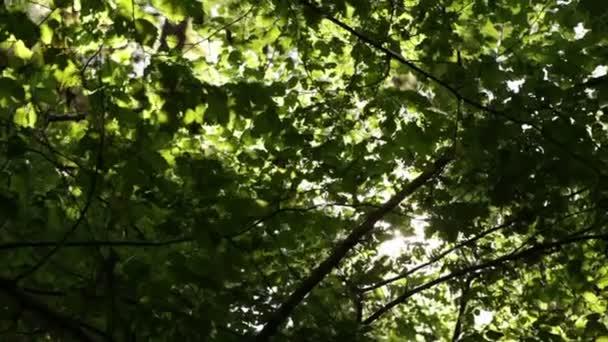 Slunce svítilo za listí a větvičky
