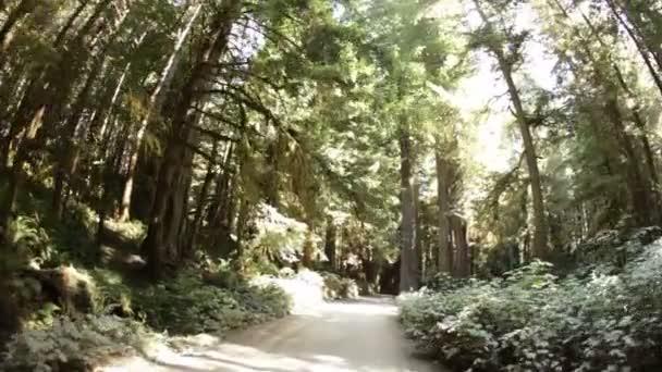 Polní cesta přes borový les