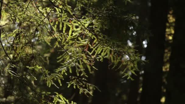 stálezelené větve vane lehký vánek