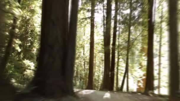 Dlážděná cesta pralesem redwood