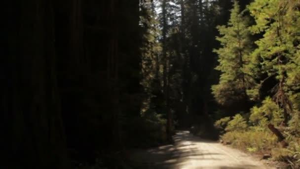 Jízdu na temné silnici v lese sekvoje