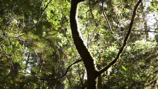 Young tree in dense forest