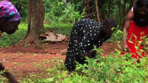 Dívka pracuje na zahradě s rodinou v Ghaně