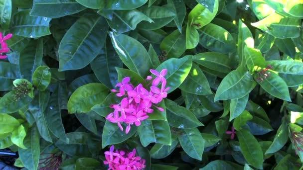 květy mezi zelenými listy