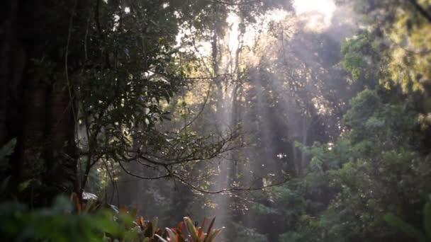 Naklápěcí záběry stromů a korunách stromů za slunečného dne