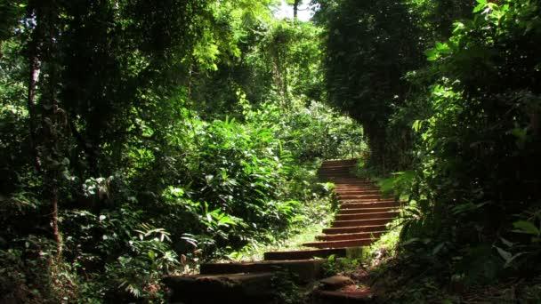 Schody v tropickém pralese