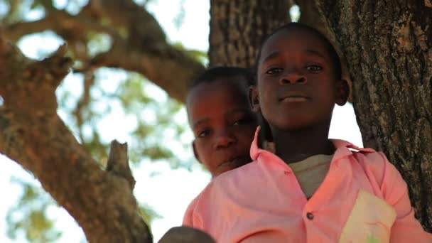 Two kids in a tree in Kenya, Africa.