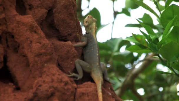 Africké ještěrka sedí na velké termitišti