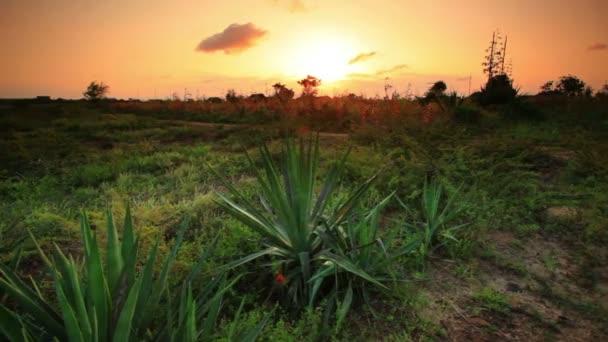 Africká krajina s kaktusy při západu slunce