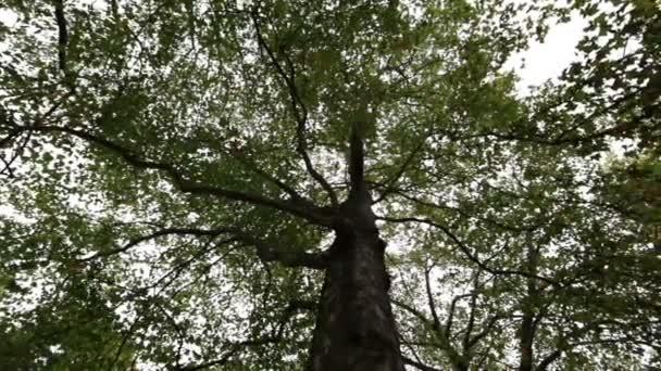 fa ágak és levelek ellen fehér égen