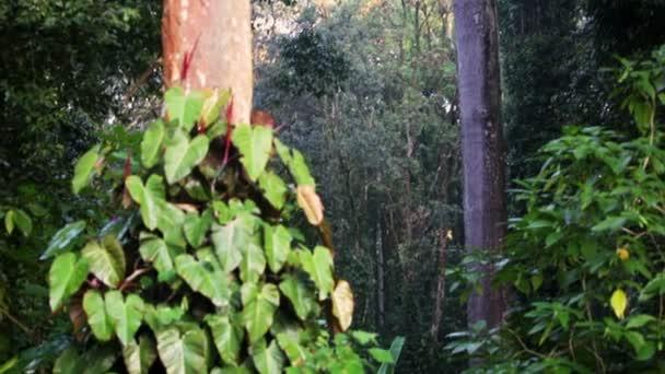 Low úhel pan baldachýn deštného pralesa