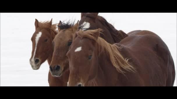 Pferde laufen auf den Bonneville-Salinen