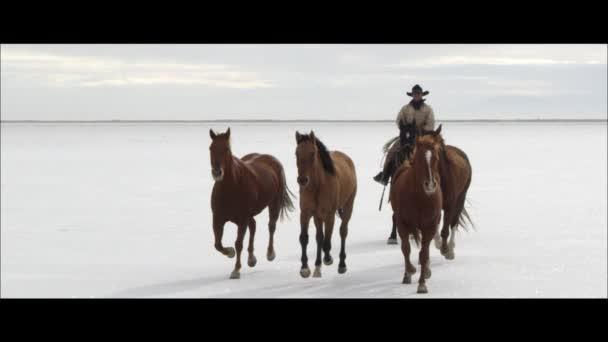 cowboy lovaglás lovak mögött