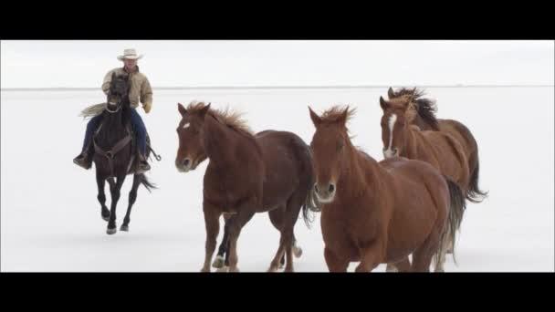 koně s kovboji
