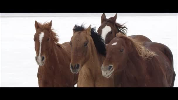 koně na Bonneville Salt Flats