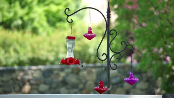 Statický pohled kolibříkovi létající kolem krmítka