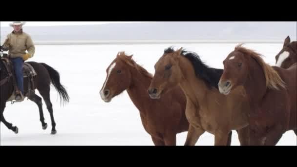 Pferde laufen mit Cowboy