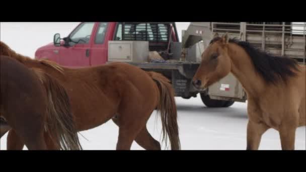 koně běží kolem nákladních automobilů a tahačů
