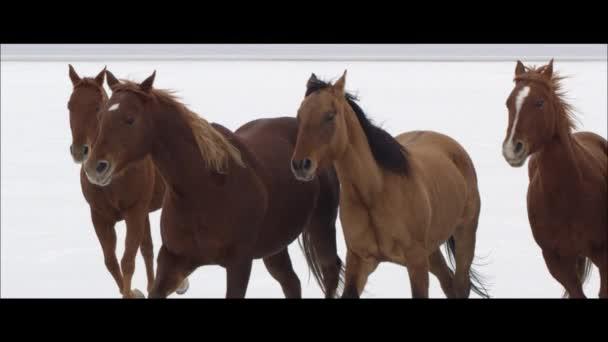 horses running on the Bonneville Salt Flats