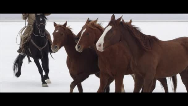 horses running by cowboy