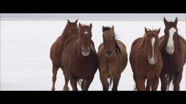 lovak futás Bonneville sóval lakások