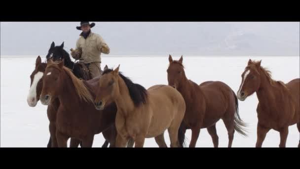 kovboj tlačí koně