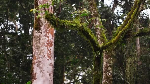 Pan porostlé mechem a mechu bez stromů